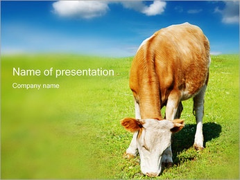 Grazing Cow PowerPoint Template