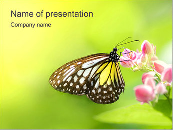 Butterfly on Flower PowerPoint Template