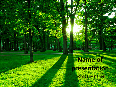 The rays of the sun through the green park PowerPoint Template