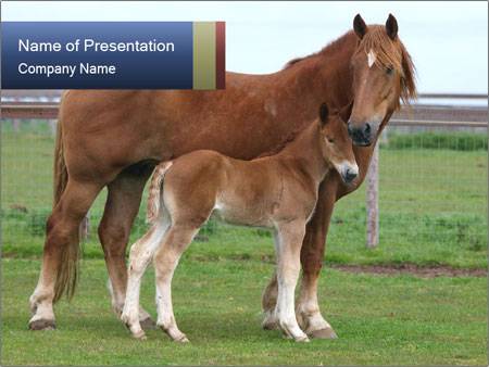 Horse Standing with its Foal PowerPoint Template