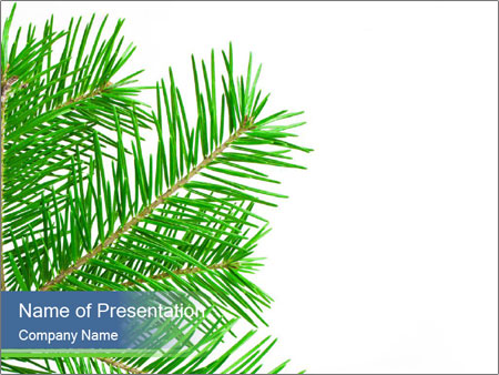 Green Spruce Branch PowerPoint Template