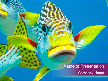 Tropical Yellow Fish PowerPoint Template