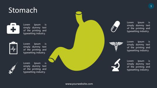 Stomach PowerPoint Infographics