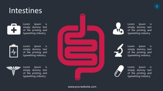 Intestines PowerPoint Infographics
