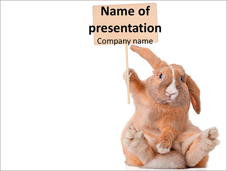 Rabbit with Cardboard PowerPoint Template