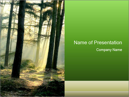 Sun Rays in a Deep and Mistic Forest PowerPoint Template