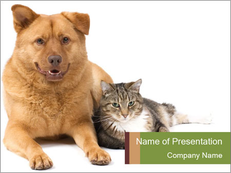 Dog And Cat Napping Together Powerpoint Template Infographics Slides