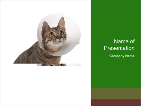 Cat in Protective Cone PowerPoint Template