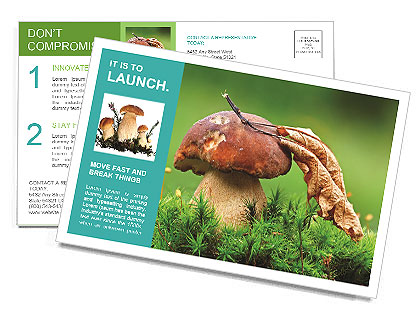Mushroom In The Grass Postcard Template