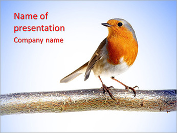 Humming Bird PowerPoint Template