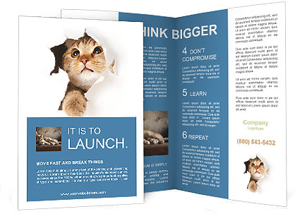 Cat Hides Brochure Template