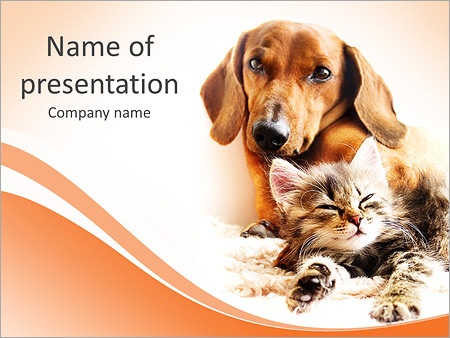 Dutchshund With Cat Powerpoint Template Infographics Slides