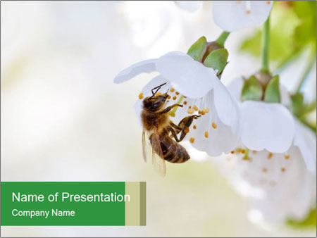0000050338 I pattern delle presentazioni del PowerPoint