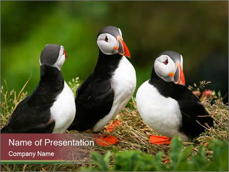 0000051228 PowerPoint Template
