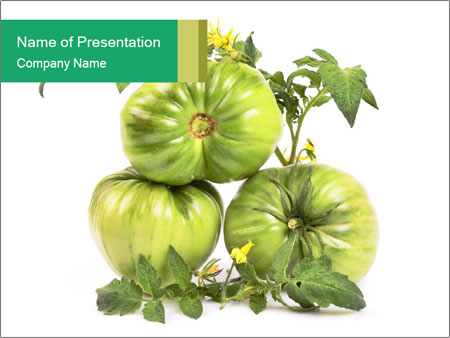 Green Tomatoe PowerPoint Template