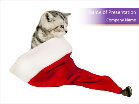 Kitten Hiding in Santa Claus Hat PowerPoint Template