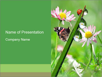 Insects in Spring Grass PowerPoint Template