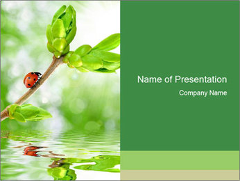 Ladybug Sitting on Spring Branch PowerPoint Template