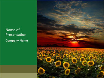 Sunset in Sunflower Field PowerPoint Template
