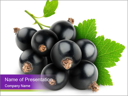 Healthy Black Currants PowerPoint Template
