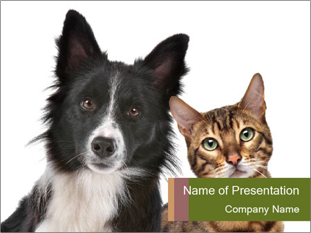 Curious Cat And Dog Powerpoint Template Infographics Slides