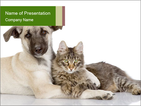 Friendship Between Cat And Dog Powerpoint Template Infographics Slides