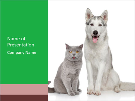 Husky Dog And Cat Powerpoint Template Infographics Slides
