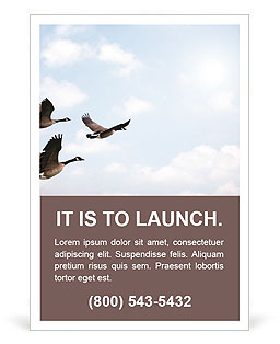 Birds Migration Ad Template
