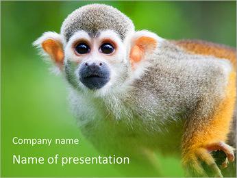 Singe Modèles des présentations  PowerPoint