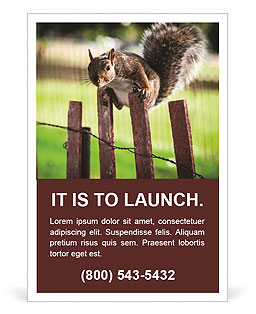 Squirrel Ad Template
