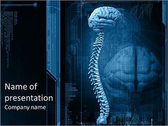 La moelle épinière et le cerveau Modèles des présentations  PowerPoint