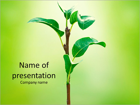 The birth of a new life PowerPoint Template