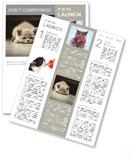 Small gray kitten lying on the floor Newsletter Template