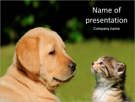 Friendship Cats And Dogs Powerpoint Template Infographics Slides