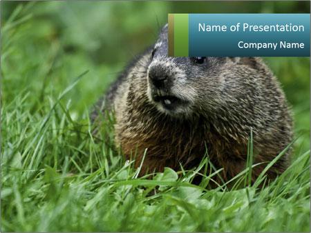 Ground Squirrel PowerPoint Template
