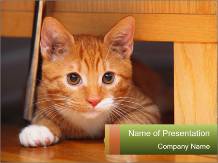 Little Red Cat PowerPoint Template