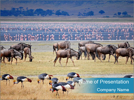 Wildbeest migration PowerPoint-Vorlagen