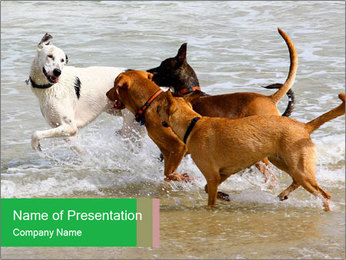 Dogs playing PowerPoint Template